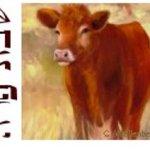 Jövő szombaton ünnepeljük a vörös tehén törvényének szombatját