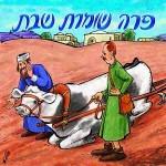 Következő szombatunk: Sábesz Póró (שבת פרה)