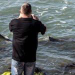 Cápaturizmus az izraeli partoknál