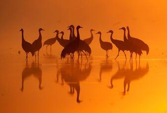 Izrael madárpopulációja a világ nyolcadik csodája