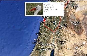 Elindult Izraelből az első, tavaszra Magyarországra visszatérő gólya
