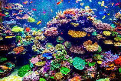 Miközben a világ korallzátonyai haldoklanak, Izrael koralljait csodálják a kutatók