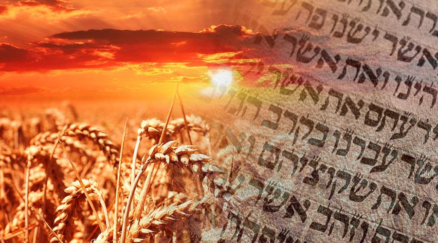 Vasárnap délelőtt Shavuot afterparty a Bethlenben