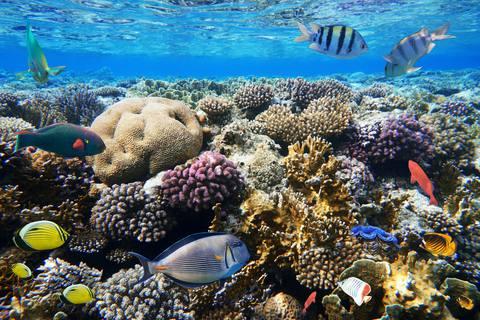 Ökocsoda: a hőmérséklet emelkedésének ellenálló korallokat fedeztek fel