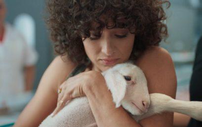 Ki enne meg egy élő bárányt? (Videóval)