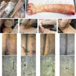 120 ezer éves díszített szarvasmarhacsontot fedeztek fel Izrael