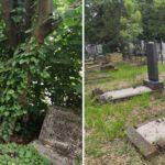 Négy budapesti zsidó temetőt hoztak rendbe a közelmúltban