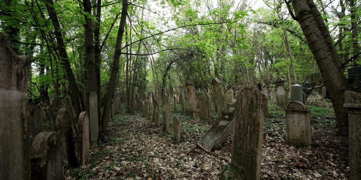 Önkéntes nap a Kozma utcai zsidó temető legrégebbi síremlékeit őrző parcella megtisztítására