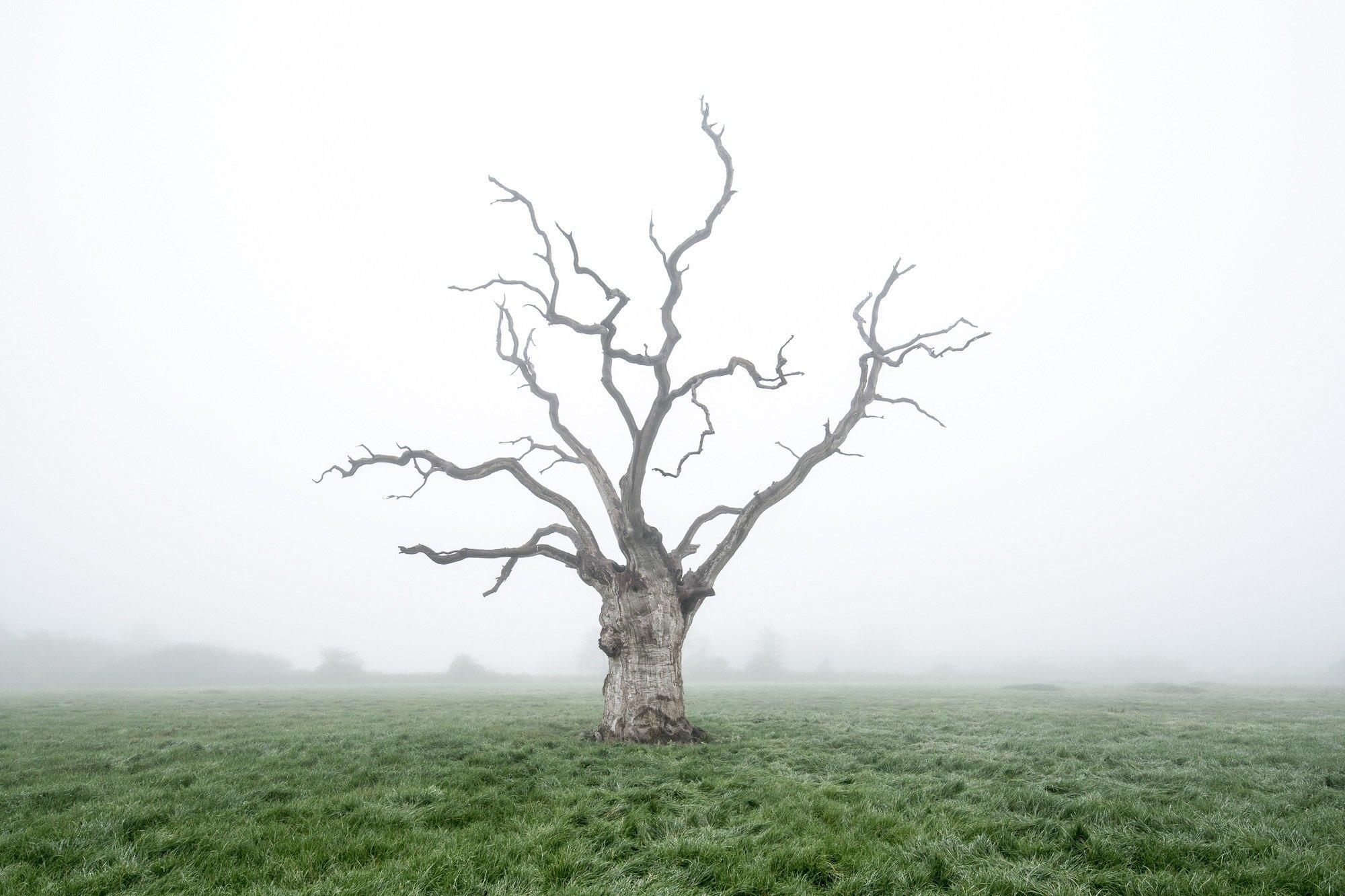 Izraelt kivéve a világ fáinak harminc százalékát a kihalás veszélyezteti